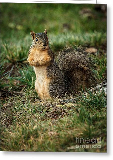 Fox Squirrel Greeting Cards - I Am So Cute Greeting Card by Robert Bales