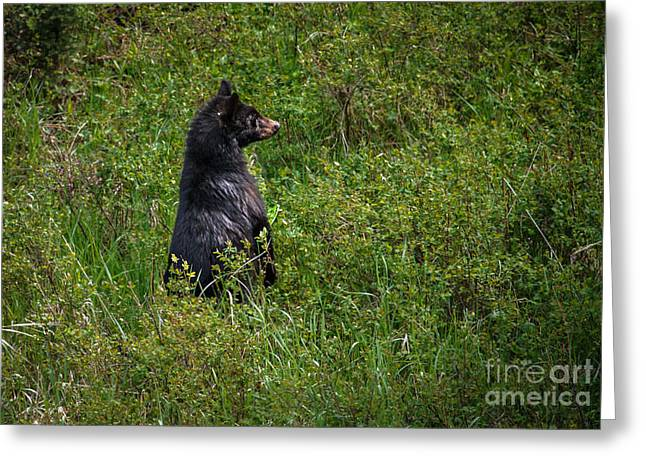 Survive Greeting Cards - I Am So Handsome Greeting Card by Robert Bales