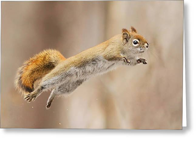 Flying Greeting Cards - I Can Fly! Greeting Card by Mircea Costina