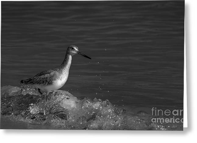 Wading Bird Greeting Cards - I Can Make It - bw Greeting Card by Marvin Spates