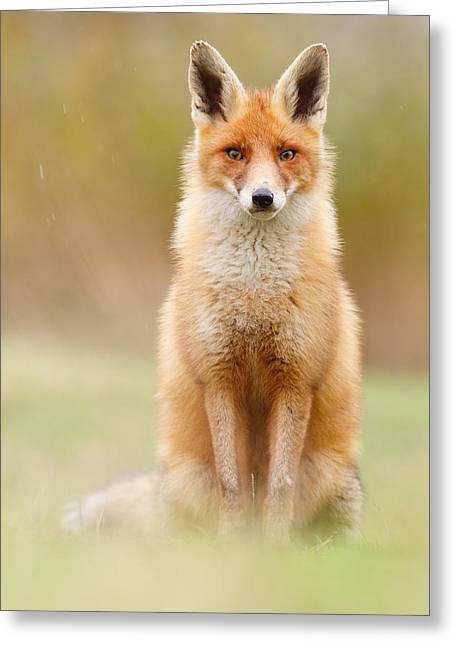 Vulpes Vulpes Greeting Cards - I Cant Stand the Rain Greeting Card by Roeselien Raimond