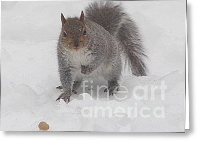 Wintry Greeting Cards - I Found a Peanut Greeting Card by Jari Hawk