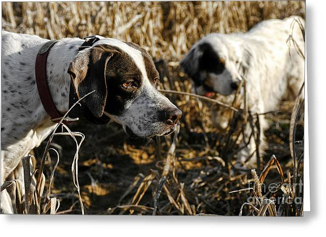 Setter Pointer Greeting Cards - I got your front you got my back Greeting Card by Chip Laughton