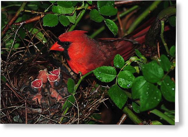 Birds In A Nest Greeting Cards - I Have my Eye on You Greeting Card by Frozen in Time Fine Art Photography