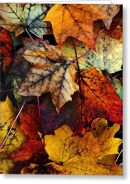 Red Leaves Digital Art Greeting Cards - I Love Fall 2 Greeting Card by Joanne Coyle