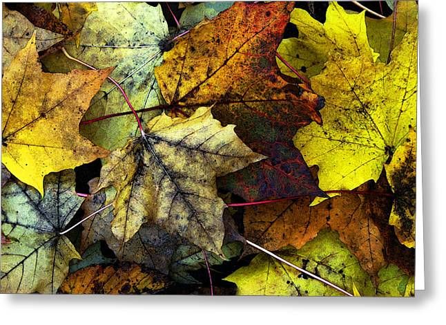 Color Enhanced Greeting Cards - I Love Fall Greeting Card by Joanne Coyle