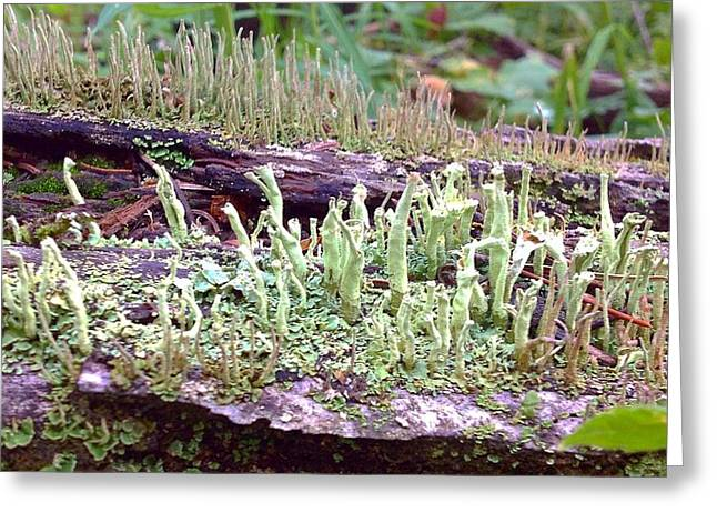Fungi Pyrography Greeting Cards - I Love Fungi Greeting Card by Ladibug Love