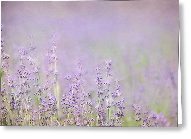 Bucks County Farm Greeting Cards - I Love Lavender Greeting Card by Lori Deiter