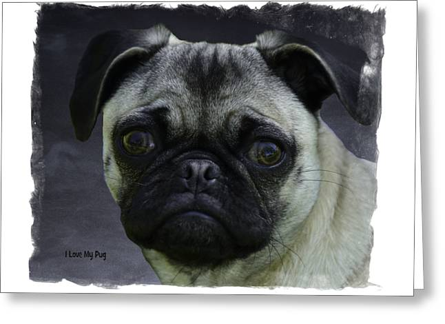Puppies Photographs Greeting Cards - I Love My Pug Greeting Card by Image Takers Photography LLC - Carol Haddon