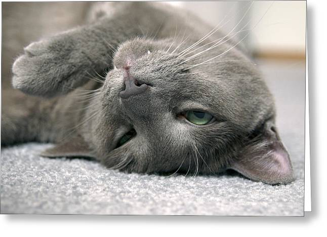 Cat On Back Greeting Cards - I Love To Sleep On My Back Greeting Card by James Steele