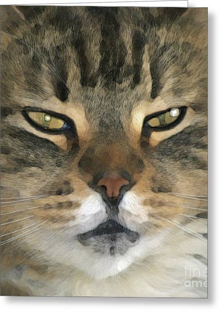 Abstract Cat Greeting Cards - I Miss Him Sometimes ... Greeting Card by Gwyn Newcombe