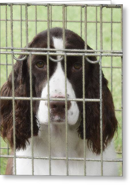 Spaniel Greeting Cards - I See You Greeting Card by Marnie Malone