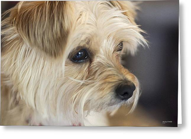 Cute Havanese Greeting Cards - I see you Greeting Card by Michael Perlin