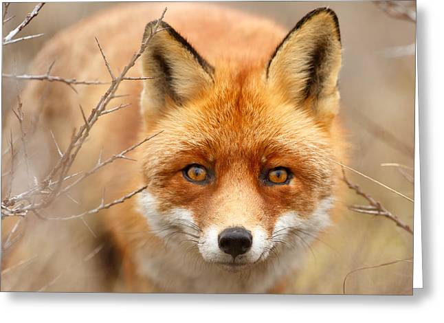 I See You - Red Fox Spotting Me Greeting Card by Roeselien Raimond
