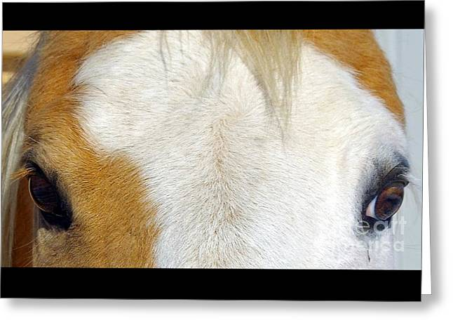 Eyelash Greeting Cards - I See You Greeting Card by Spinning Spur Photography