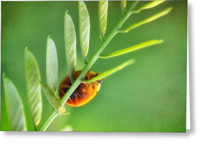 Beatles Photographs Greeting Cards - I see you Greeting Card by SK Pfphotography