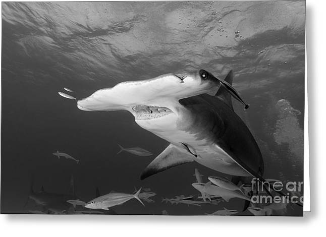 Underwater Photos Greeting Cards - I See You Greeting Card by Thomas Major