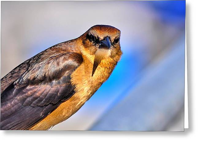 Flying Bird Greeting Cards - I See You Greeting Card by William Jones