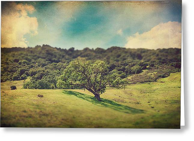 Oak Tree Greeting Cards - I Will Lay Down My Heart Greeting Card by Laurie Search