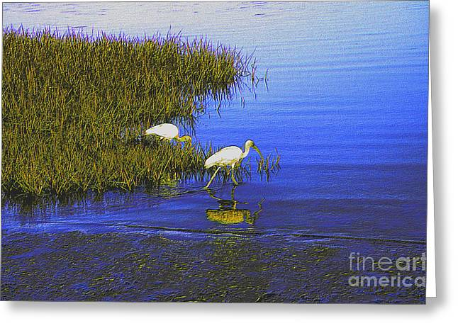 Ibis Morning 2 Greeting Card by Kathi Shotwell