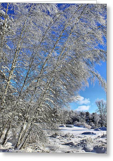 Snow Tree Prints Greeting Cards - Ice Laden Birches Greeting Card by Deborah Benoit