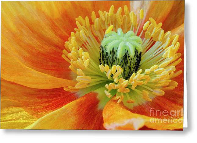 Angelini Greeting Cards - Icelandic Fire visit www.AngeliniPhoto.com for more Greeting Card by Mary Angelini