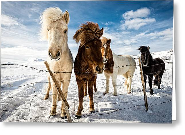 Icelandic Hair Style Greeting Card by Mike Leske