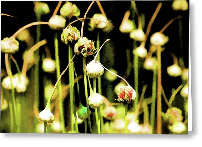 Pacific Northwest Mixed Media Greeting Cards - Icelandic Poppies Greeting Card by Bonnie Bruno