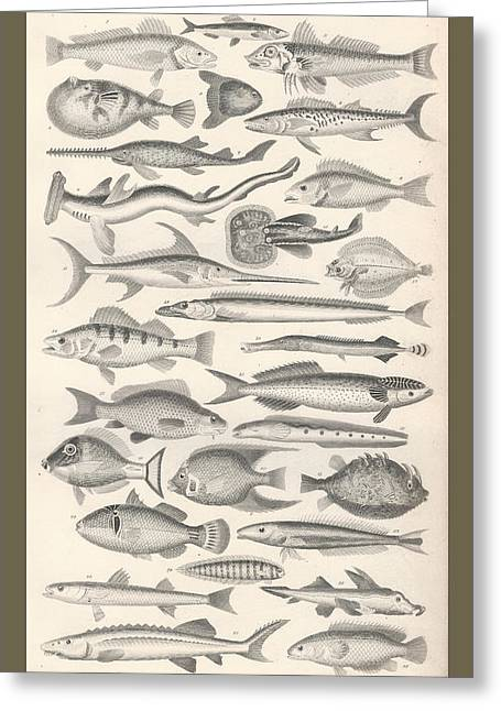 Fish Drawings Greeting Cards - Ichthyology Greeting Card by Captn Brown