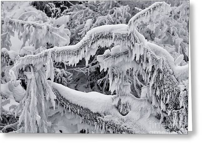 Hoar Frost Greeting Cards - Icy Breath Of the Frost Dragon Greeting Card by Royce Howland