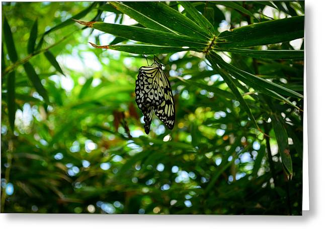 Kite Greeting Cards - Idea leuconoe Greeting Card by Andy