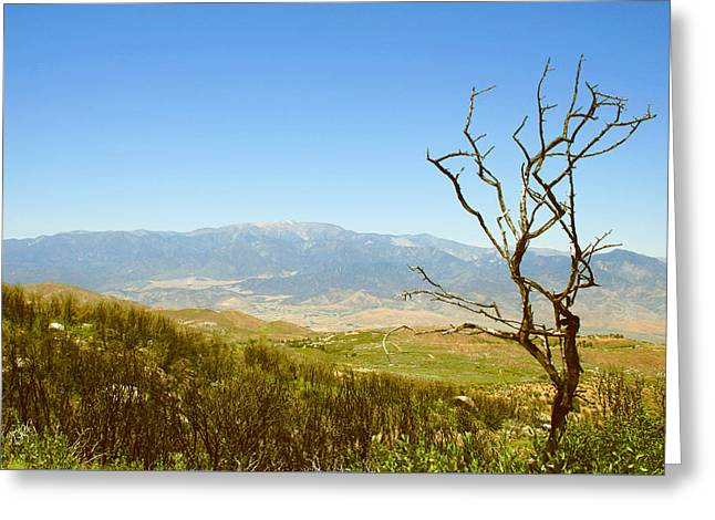 Idyllwild Greeting Cards - Idyllwild Mountain View With Dead Tree Greeting Card by Ben and Raisa Gertsberg