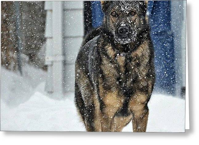Puppies Photographs Greeting Cards - If You Dare Greeting Card by Nikki McInnes