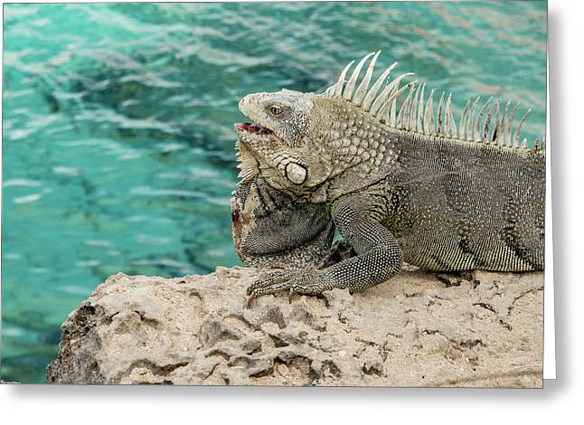 Iguana 3 Greeting Card by Jean Noren