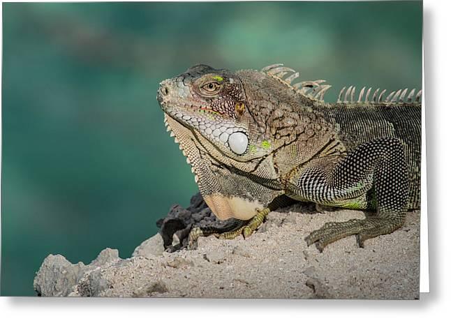 Iguana 4 Greeting Card by Jean Noren