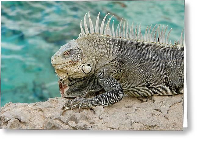 Iguana 5 Greeting Card by Jean Noren