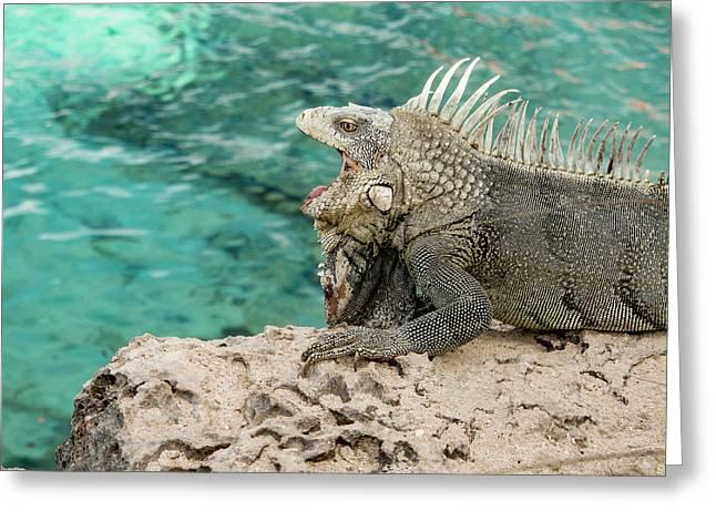 Iguana 6 Greeting Card by Jean Noren