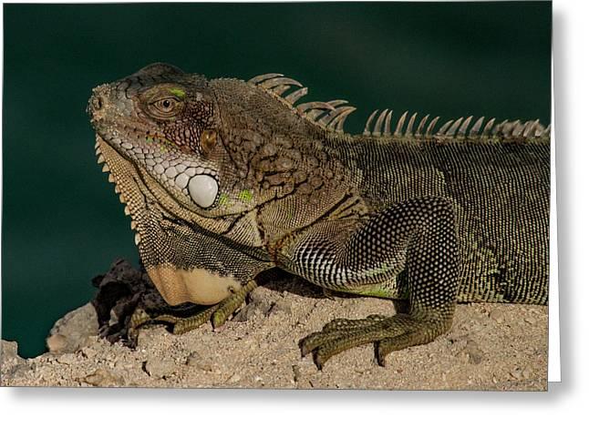 Iguana Greeting Card by Jean Noren