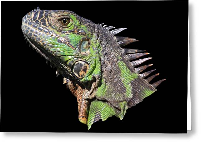 Lizard Head Greeting Cards - Iguana Greeting Card by Shane Bechler