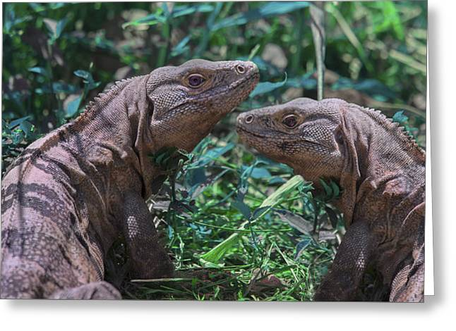 Iguanas  Greeting Card by Betsy C Knapp