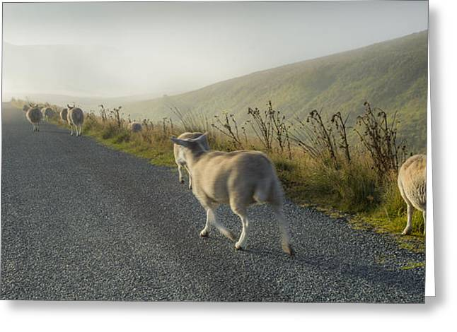 Herd Bound Greeting Cards - Ill find my way home. Greeting Card by Tony Brierton