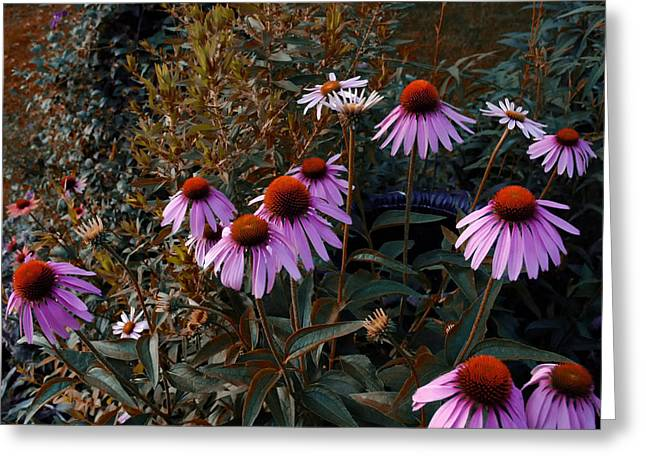 Cone Flowers Greeting Cards - Ill Have The Purple Ones Greeting Card by Ross Powell
