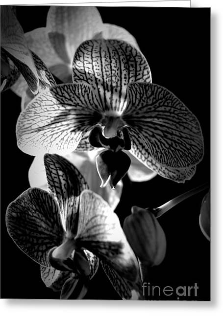 Illume In Monochrome Greeting Card by Chalet Roome-Rigdon