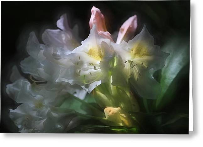 Illuminated Rhododendrons Greeting Card by Donna Kennedy