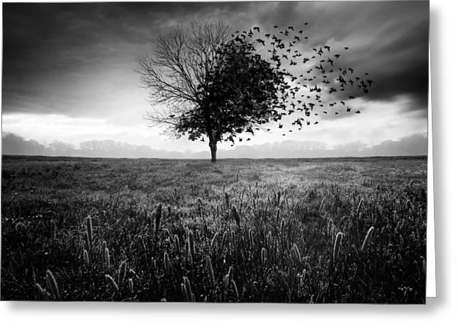 Lonely Greeting Card featuring the photograph Illusion D'un Printemps Perdu by Sebastien Del Grosso