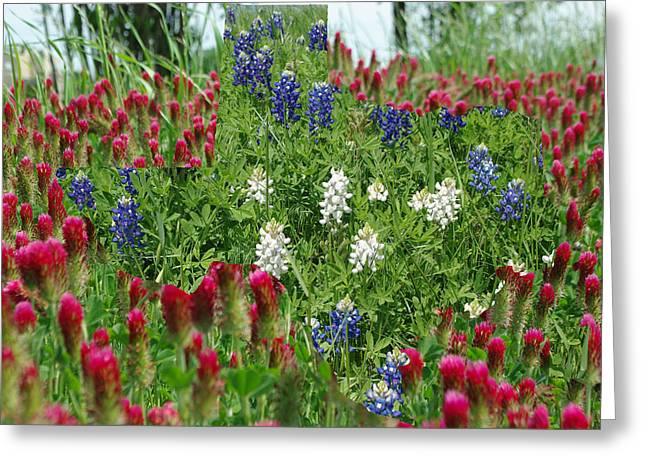 Digitally Created Greeting Cards - Illusions of Texas in Red White Blue Greeting Card by Robyn Stacey