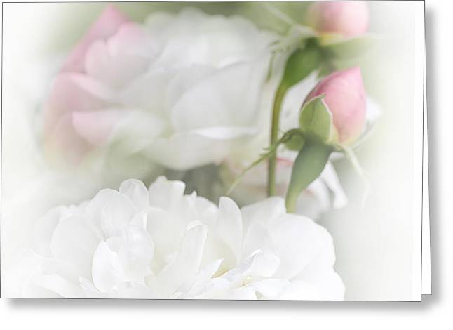 Illusions of White Roses and Pink Rosebuds Greeting Card by Jennie Marie Schell