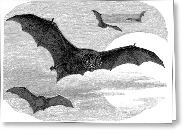 Demon Ears Greeting Cards - Illustration of the barbastelle bat Greeting Card by The one eyed Raven