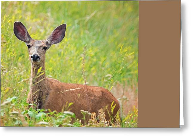 I'm All Ears Greeting Card by Loree Johnson