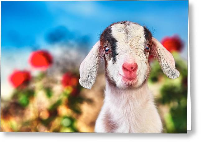 Goat Photographs Greeting Cards - Im in the Rose Garden Greeting Card by TC Morgan